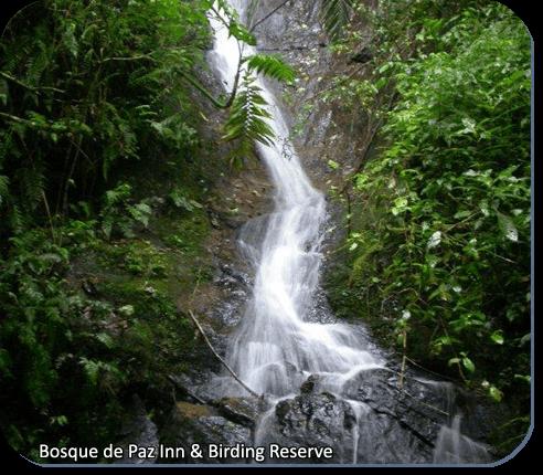 Bosque de la Paz Inn & Bird Reserve Waterfall