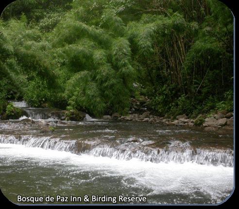 Bosque de la Paz Inn & Bird Reserve river