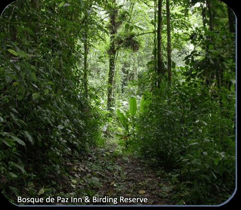 Bosque de la Paz Inn & Bird Reserve trail