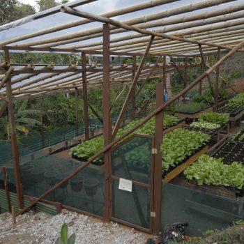 Aguila de Osa Organic Green House
