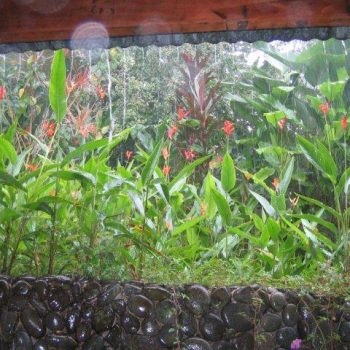 plants under rain