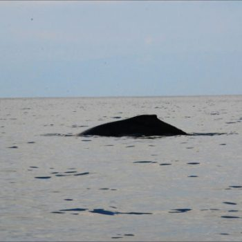 Whale on way to Cano