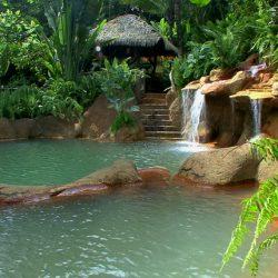 jungle settting