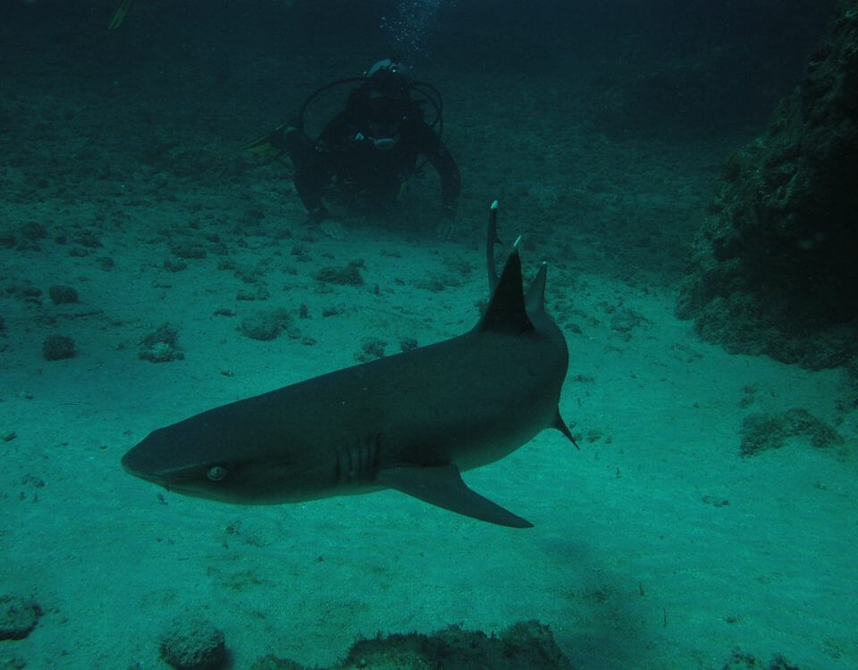 Buceo 125