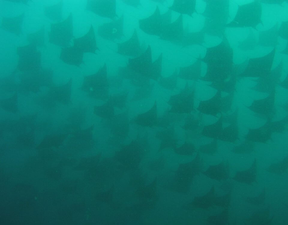 Buceo 147